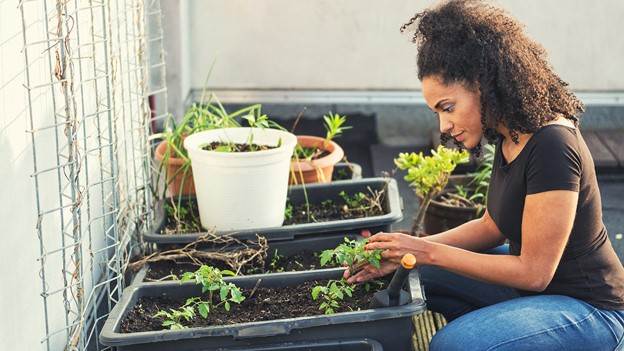 Plants don't have feelings and aren't conscious, a biologist argues