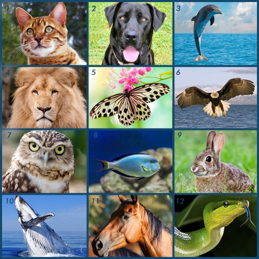 You are currently viewing Which Animal Are You?
