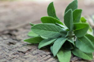 Seven Natural Medicines For A Strong Immune System