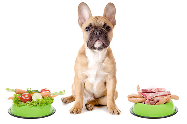 6 PET SUPERFOODS TO KEEP YOUR PETS EXTRA HEALTHY