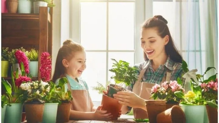 You are currently viewing 7 Indoor Plants That Create Positive Energy In Your Home