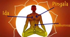 Read more about the article Sushumna, Ida and Pingala Nadis of the Subtle Body